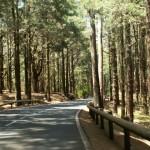 La Esperanza forest